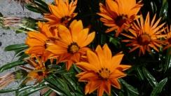 jardinfloral1