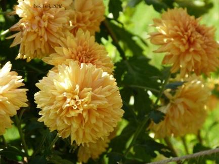 jardinfloral13