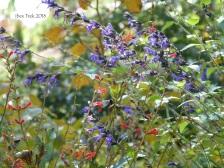 jardinfloral16