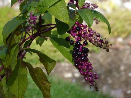 jardinfloral3