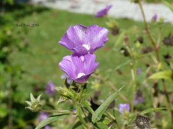 jardinfloral8
