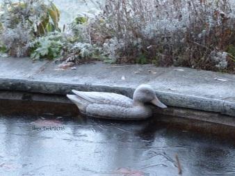 Même la canne est gelée