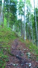 Sentier de terre, graviers et feuilles, très glissant