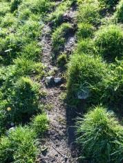 Motte et terre très collante. Extrêment glissant