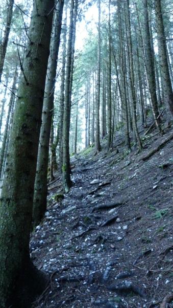 Chemin de terre, graviers, épingles d'arbres et racines. Extrêment glissant mouillé.