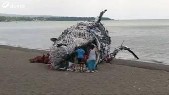 Une baleine qui a succombé!